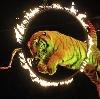 Цирки в Заводопетровском